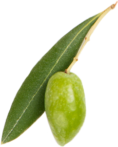 Olive and leaf